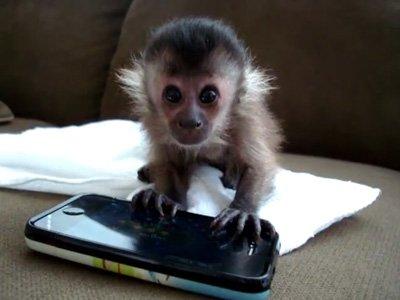 Rumsfeld: 'Meglio una scimmia addestrata di Obama'