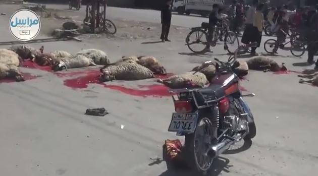Islamici occupano città e sgozzano decine di animali, lasciandoli agonizzanti – VIDEO SHOCK