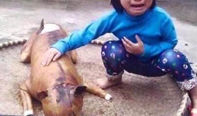 Bambina scopre il suo cane cucinato in 'rosticceria vietnamita' – FOTO CHOC