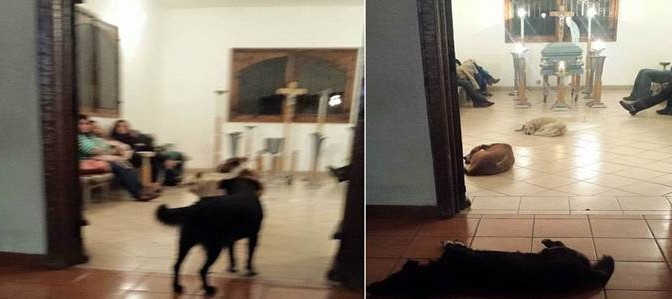 I cani randagi (e un uccellino) che sfamava le rendono omaggio a veglia funebre – VIDEO E FOTO TOCCANTI