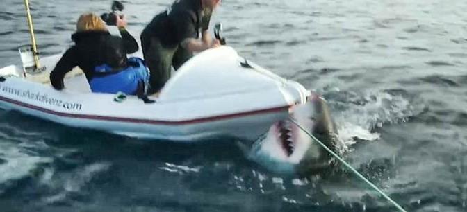 Girano doc, squalo non è d'accordo – VIDEO