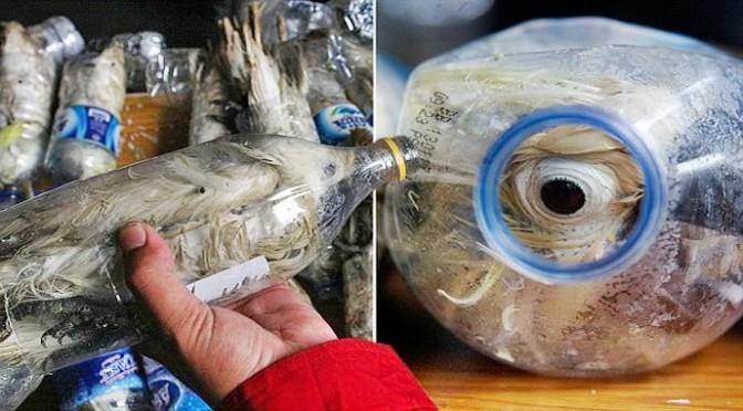 Nuova barbarie contro animali dall'Asia: i pappagalli 'in bottiglia'