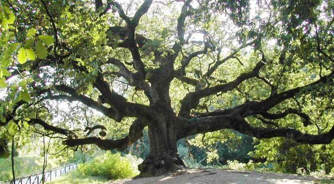Proteggere gli alberi monumentali