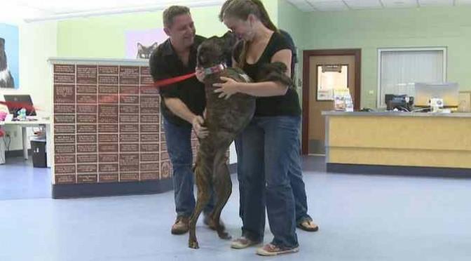 Famiglia ritrova amato cane dove 9 anni