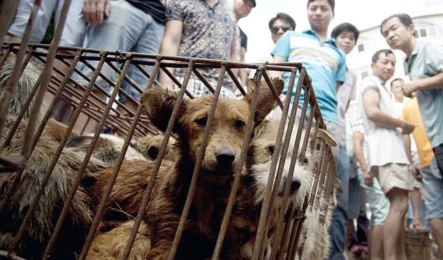 Cina: il festival della carne di cane e gatto, 10.000 consumati in un giorno