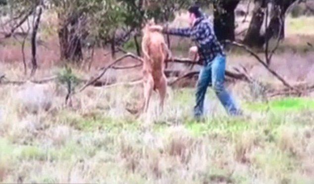 Canguro molesta il cane, proprietario lo prende a pugni – VIDEO