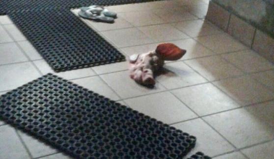 """Testa maiale davanti moschea, Questore: """"Atto blasfemo"""" – FOTO"""