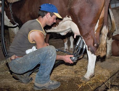 """Prefetto: """"Abbiamo bisogno immigrati perché mungono meglio le mucche"""" – VIDEO"""