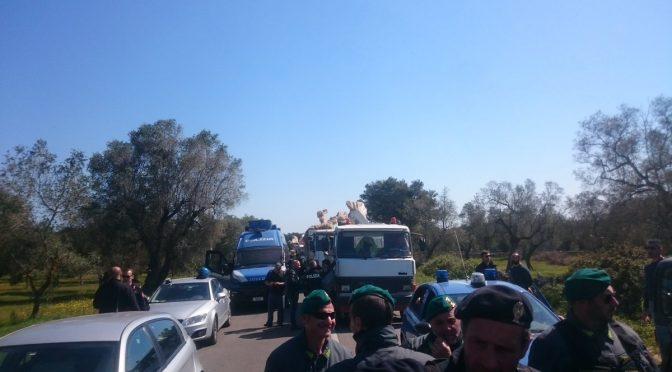 No Tap, cittadini bloccano i camion con gli ulivi sradicati