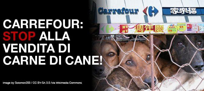 Arrestato cinese: vendeva gatti a ristoranti cinesi, salvati 500