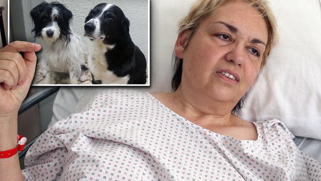 """Donna brutalmente picchiata da profuga islamica: """"I tuoi cani sono impuri"""""""