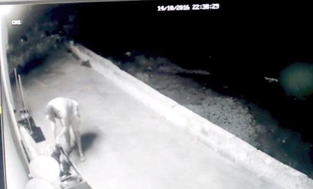Migrante violenta cagnolina, torturata a morte: video sconvolge investigatori