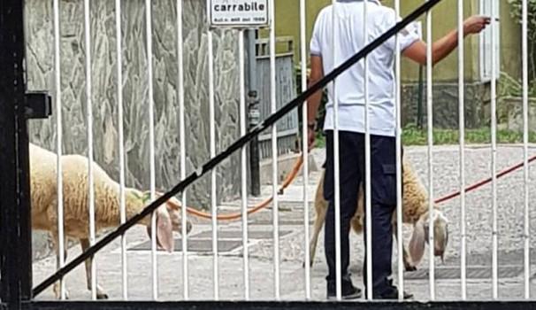 Milano, Islamici sgozzano pecore: una si lancia da terrazzo