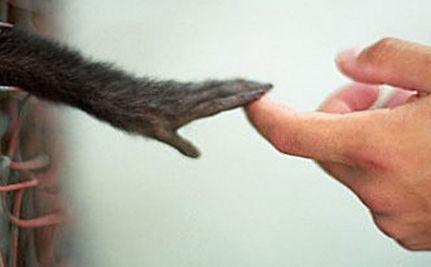 Ue all'Italia: 'liberalizzare test su animali o vi multiamo'