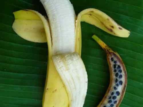 Banane addio, TR4 distruggerà l'85% dei raccolti
