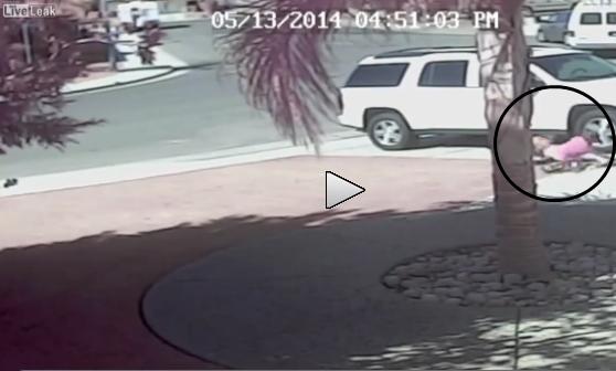 Gatto eroe salva bambino da attacco di un cane – VIDEO COMMOVENTE