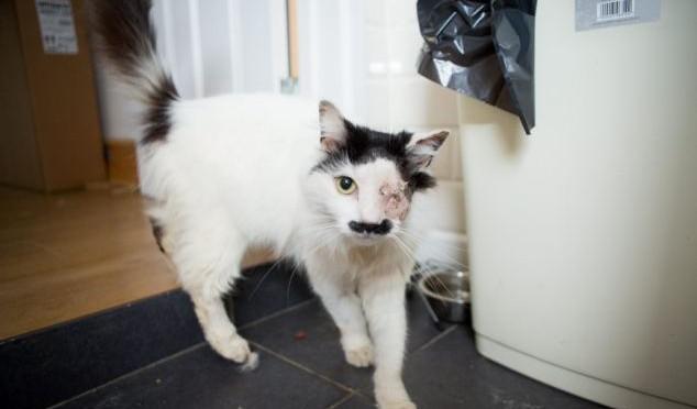 """Antirazzisti accecano gattino: """"perché somiglia a Hitler"""" – FOTO"""