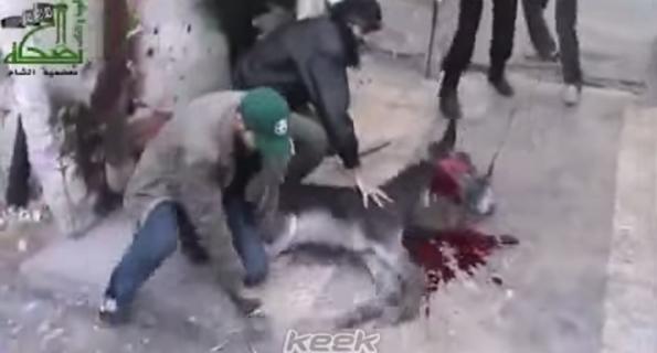 Hamas fa esplodere asini e cani kamikaze