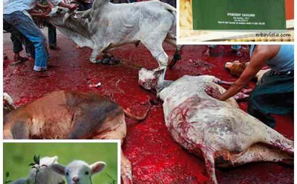 Commesse col velo e carne halal: Coop si dà allo sgozzamento rituale degli animali