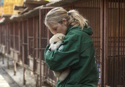 Attivisti salvano 57 cani dalla macellazione – FOTO