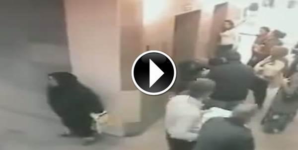 Donna velata fa 'bisogni' davanti a tutti – VIDEO