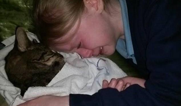 Credono sia randagio: veterinari lo eliminano