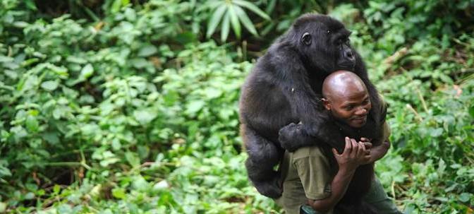 Scoperta origine Aids P e O: 'rapporti ravvicinati' con Gorilla