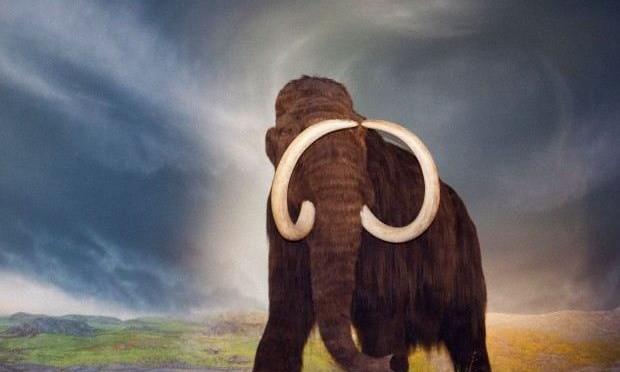 'Quaternary Park': i mammut ritorneranno in vita?