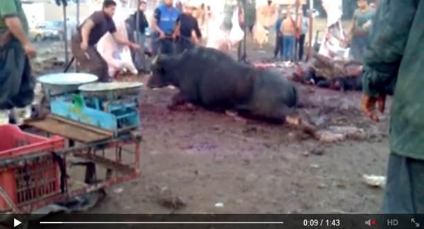 Crudeltà islamica contro gli animali – VIDEO CHOC