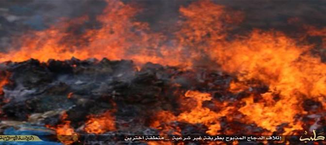 Profughi scoprono il 'fuoco' mentre fanno giardinaggio: rischiano di bruciare boschetto