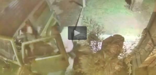 La massacrano di botte perché sfama gattini randagi – VIDEO