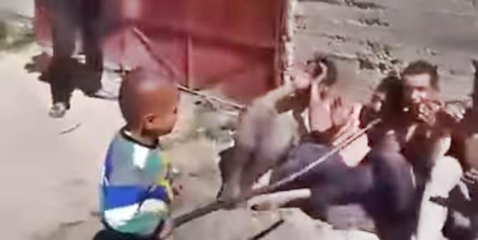Bambino islamico bastona prigionieri – VIDEO CHOC