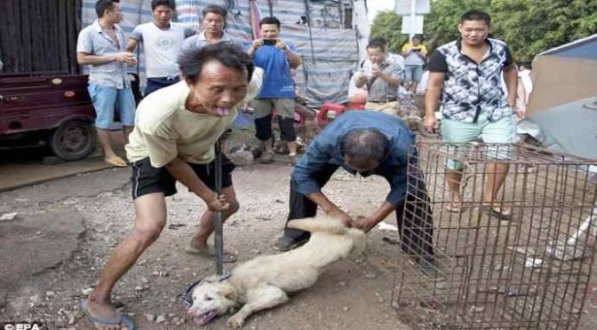 Oggi i Cinesi scuoiano migliaia di cani e gatti – FOTO CHOC
