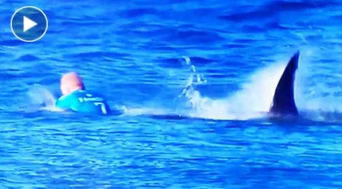Surfista sfugge ad attacco squalo – VIDEO