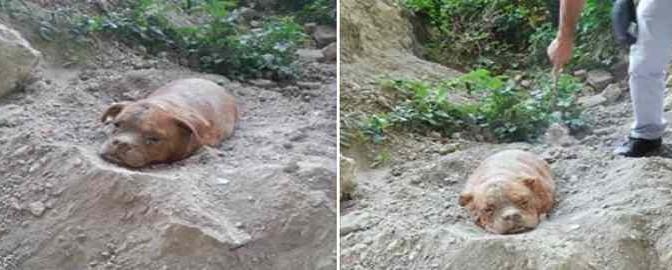 Cane sepolto vivo in banlieu parigina – FOTO CHOC