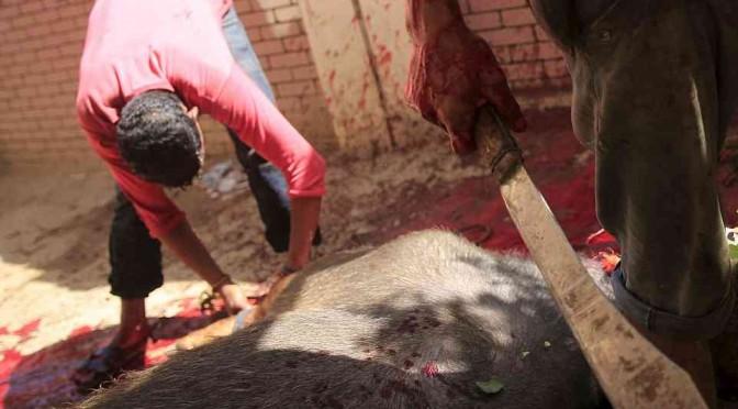 Marocchini: pecora sgozzata cucinata su pianerottolo
