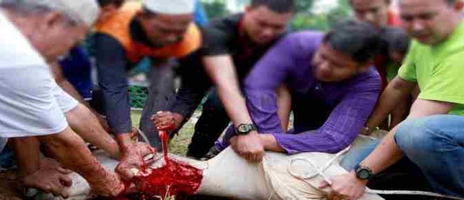 """Islamici sgozzano animali: """"Questi sacrifici favoriscono sviluppo"""""""