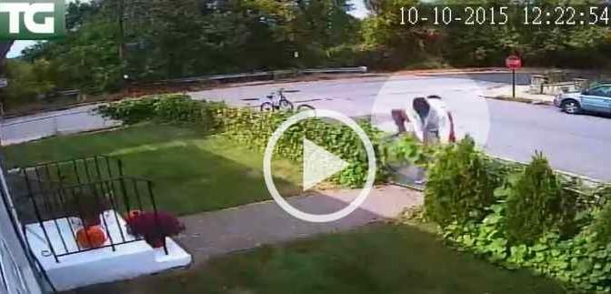 Vandali africani irrompono in giardino – VIDEO