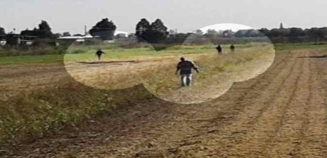 Profughi bracconieri a caccia di lepri in zona protetta