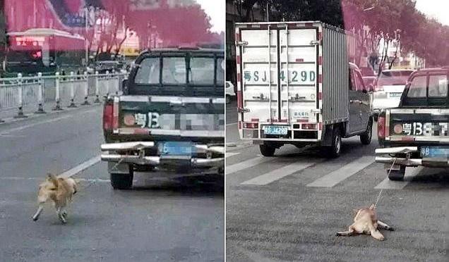 Così in Cina uccidono i cani – FOTO CHOC