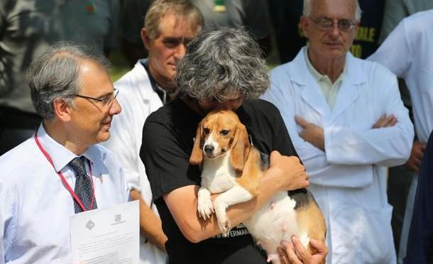 Green Hill: condannati animalisti che salvarono centinaia di Beagle