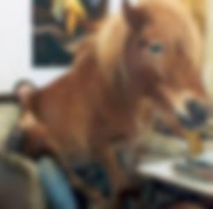 Svizzera: sono 10.000 gli zoofili, uno stupro di cavallo ogni 3 giorni