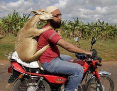 A Roma arrivano le pecore tosaerba: ecologiche e non fanno rumore