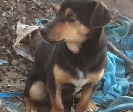 Rom abbandonano cuccioli, salvati da residenti