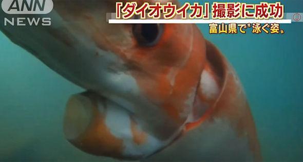Eccezionale avvistamento di un calamaro gigante – VIDEO