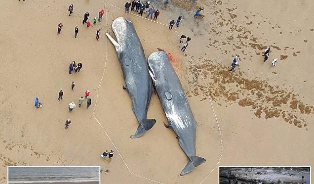Branco balene perde orientamento, strage