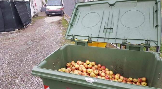 I profughi rifiutano le mele, in senso letterale – FOTO
