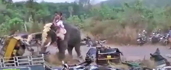 Anche gli elefanti si incazzano: si ribella e distrugge veicoli – VIDEO