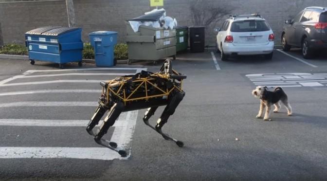 Il cane robot di Google alle prese con un cane vero