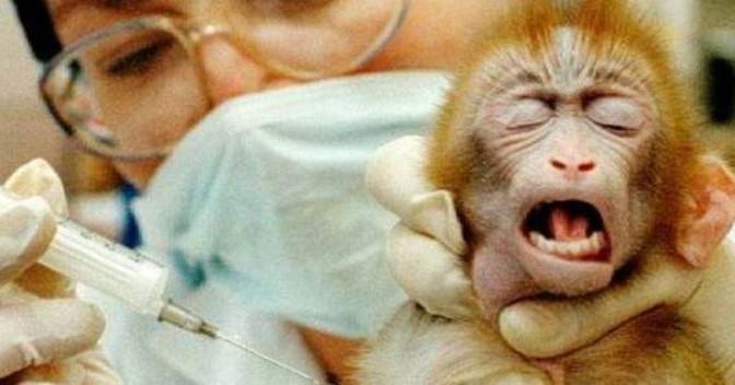 """UE multa Italia: """"Troppo difficile la vivisezione"""""""
